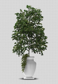 3d render of interior plant in pot isolated