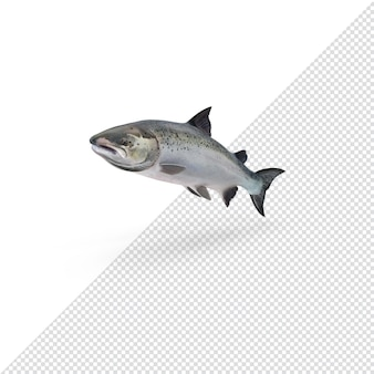 3d 렌더링 된 대서양 연어 절연