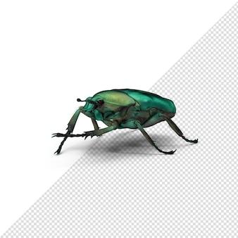 고립 된 3d 렌더링 된 녹색 풍뎅이 딱정벌레