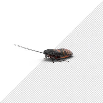 3d 렌더링 치찰음 바퀴벌레 절연