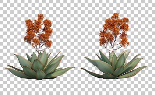 3d rendering of aloe striata