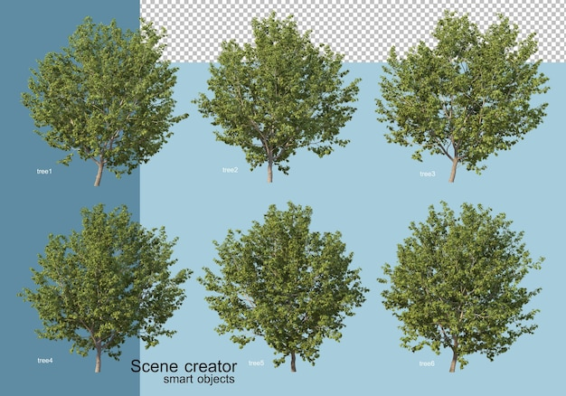 3d rendering of  arrangement of trees and flowers