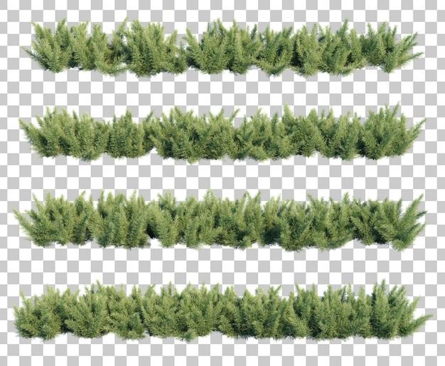 3d rendering of asparagus fern