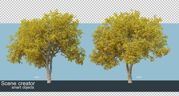 3d rendering of beautiful trees in various angles isolated