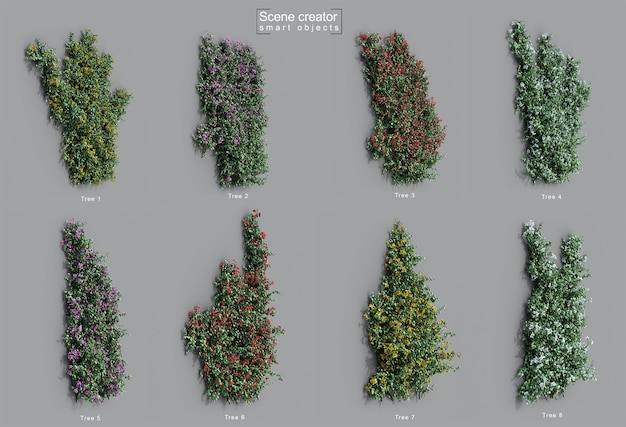 3d rendering of bougainvillea creeping wall