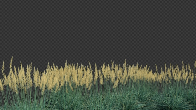 3d rendering of boulder blue fescue grass foreground