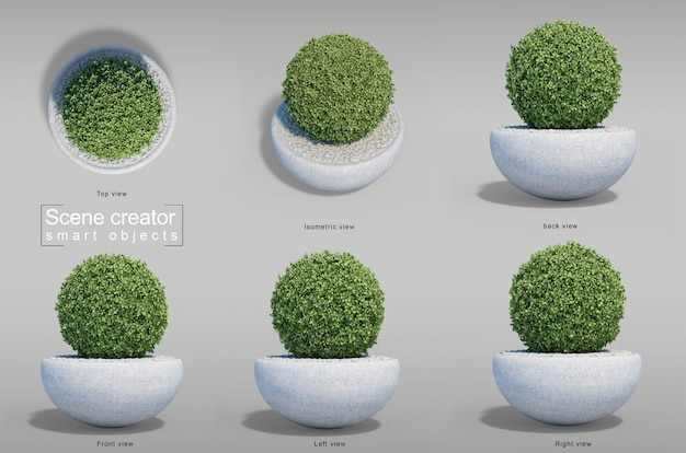 3d rendering of buxus in pot collection