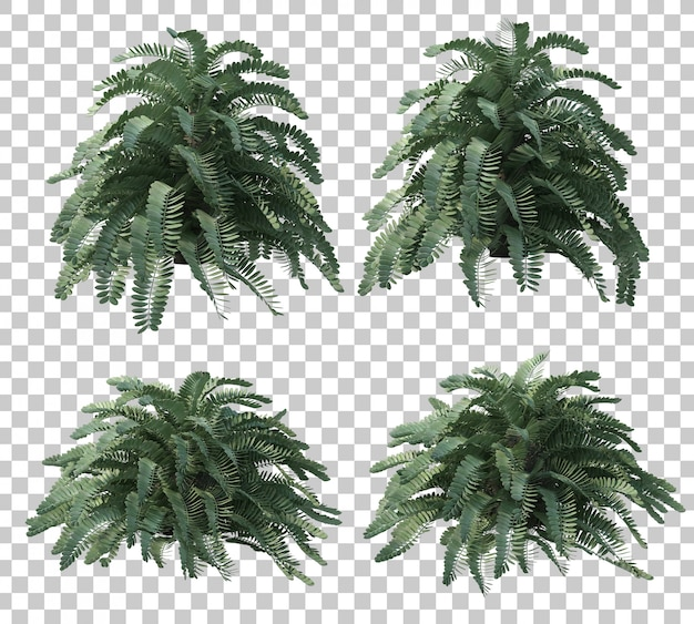3d rendering of cardboard palm