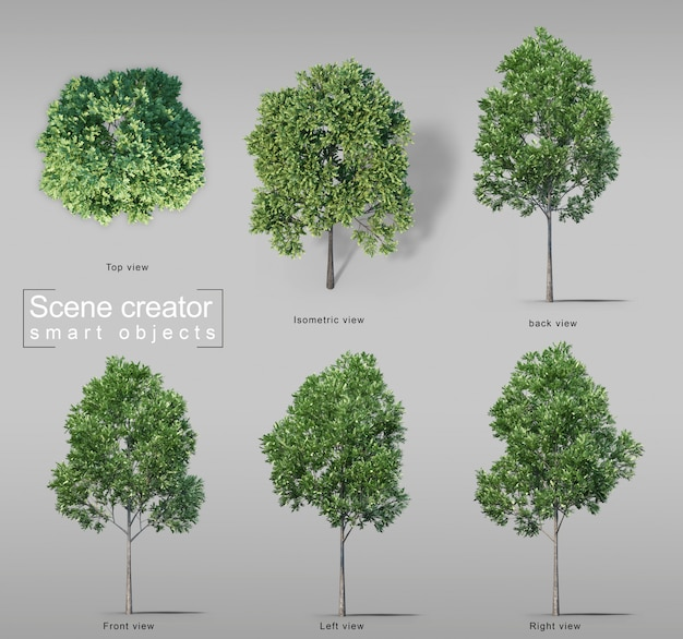 3d rendering of carrotwood trees