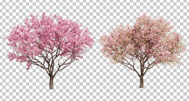3d rendering of cherry tree