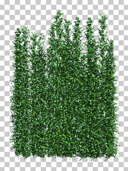 3d rendering of climbing plant