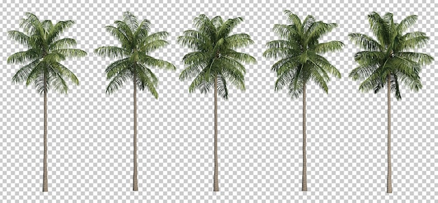 3d rendering of coconut palm trees