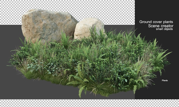 3d rendering of cover plants and large rocks Premium Psd