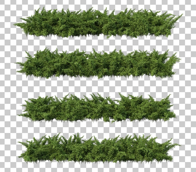 3d rendering of creeping juniper