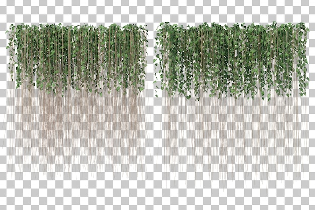 3d rendering of curtain ivy