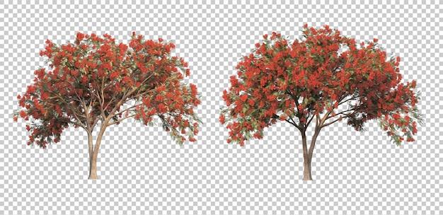 3d rendering of delonix regia trees