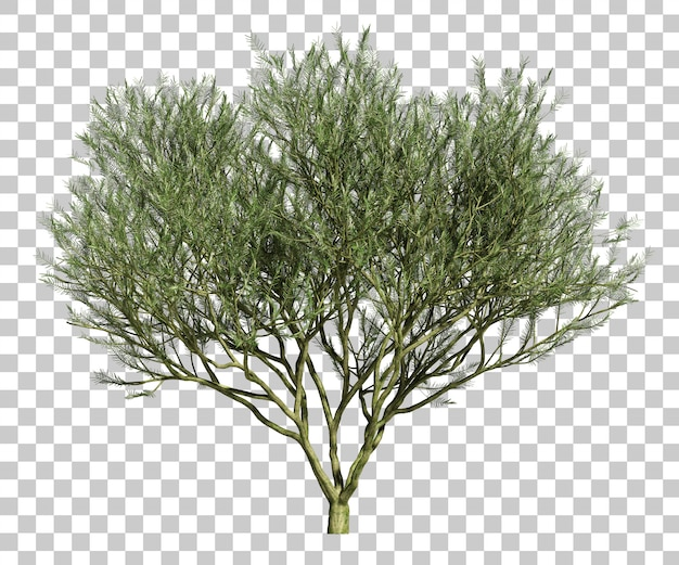 3d rendering of desert museum palo verde tree