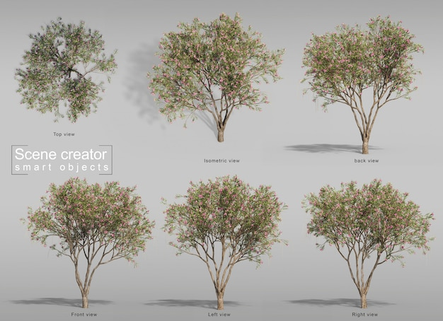 3d rendering of desert willow tree scene creator