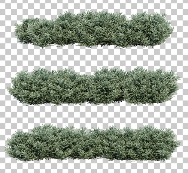 3d rendering of dwarf olive bushes