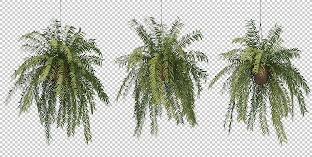 3d rendering of fern in hanging pot plants