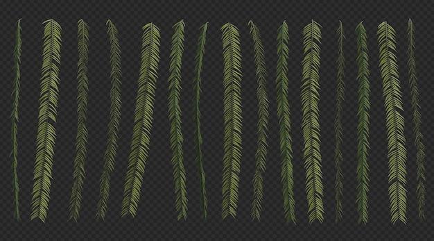 3d rendering of fern set