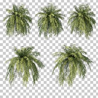 3d rendering of fern tree set