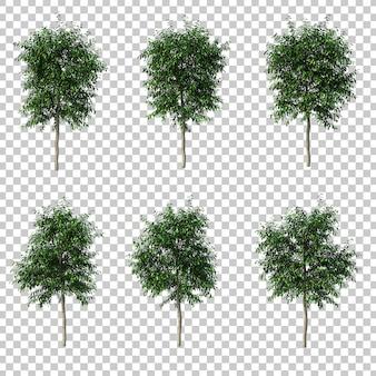 3d rendering of ficus benjamina