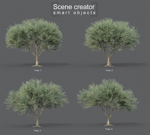 3d rendering of fruitless olive tree set