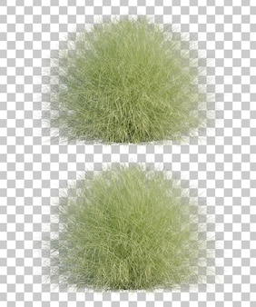 3d rendering of  gracillimus maiden hair grass