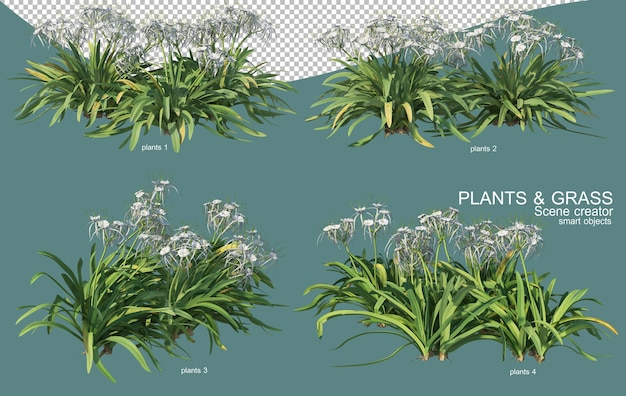 3d rendering of grass and shrub arrangements
