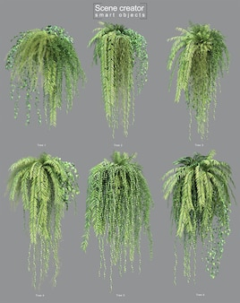 3d rendering of hanging plant
