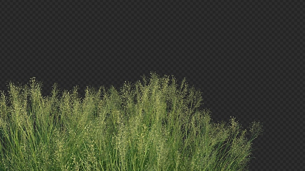 3d rendering of indian rice grass foreground