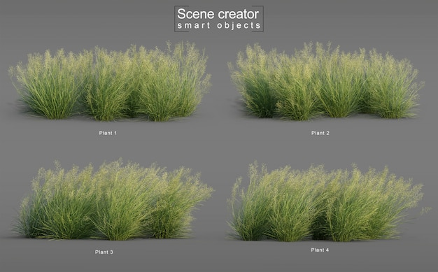 3d rendering of indian rice grass
