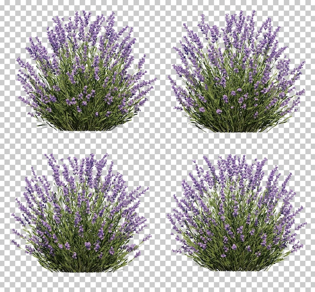 3d rendering of lavender tree collection