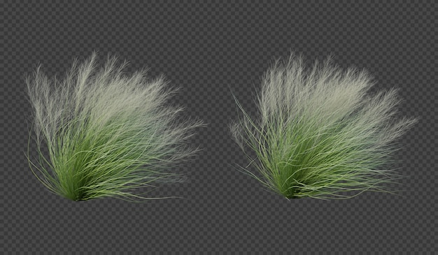 3d rendering of mexican feather grass blow