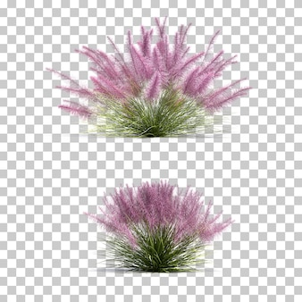 3d rendering of muhly pink grass