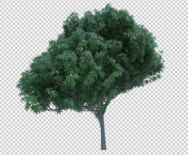 分離されたnatureオブジェクトツリーの3dレンダリング