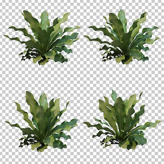 3d rendering of nest fern