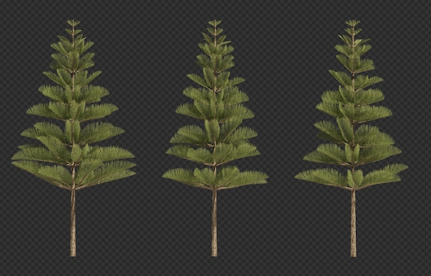 3d rendering of norfolk island pine