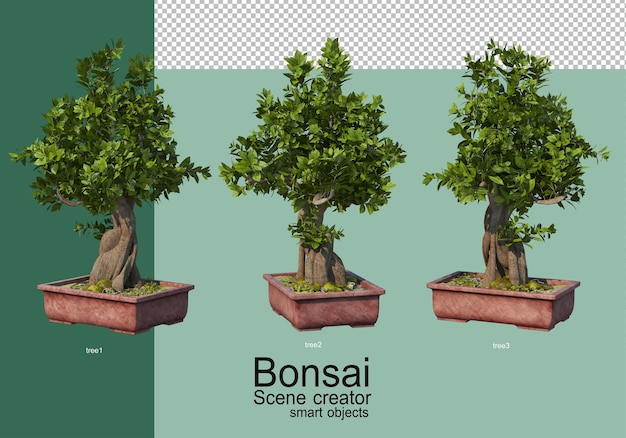 분재 나무 배열의 3d 렌더링