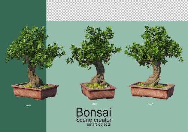 盆栽の配置の3dレンダリング