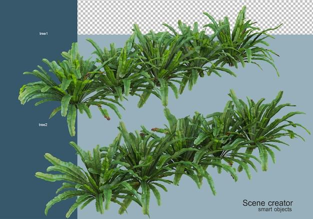 分離されたさまざまな角度で美しい低木の3dレンダリング