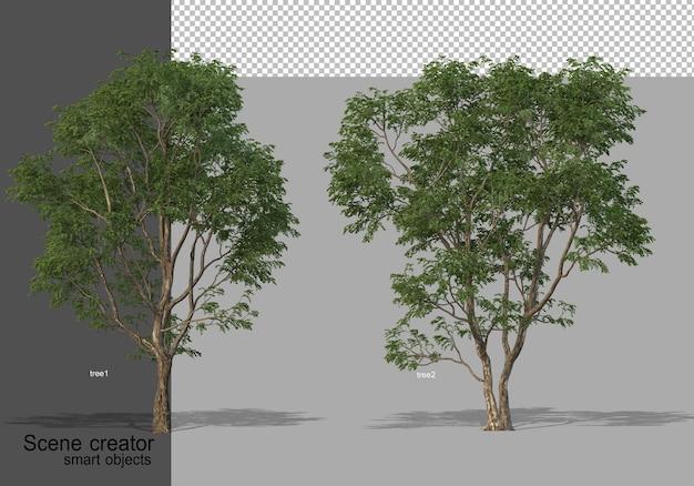 分離されたさまざまな角度で美しい木の3dレンダリング