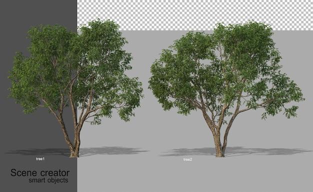 고립 된 다양 한 각도에서 아름 다운 나무의 3d 렌더링