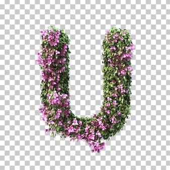 부겐빌레아 알파벳 u의 3d 렌더링