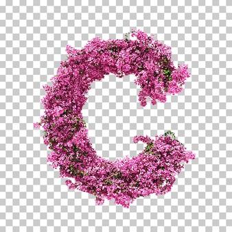 부겐빌레아 문자 c의 3d 렌더링