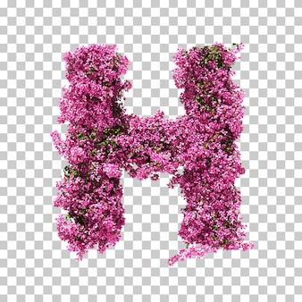 부겐빌레아 편지 h의 3d 렌더링
