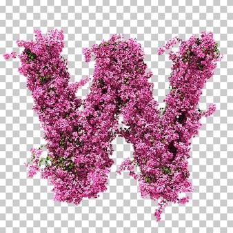 부겐빌레아 편지 w의 3d 렌더링