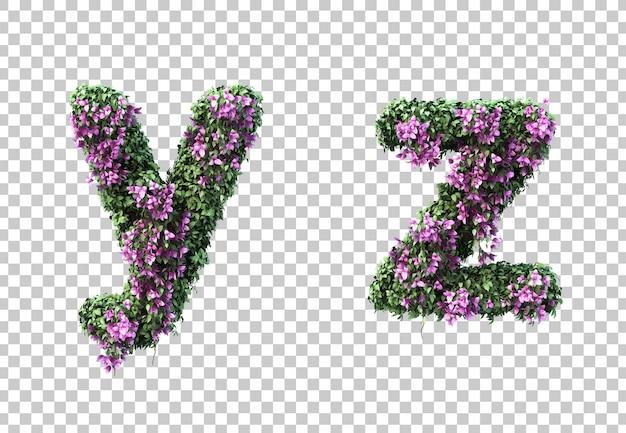 3d-рендеринг бугенвиллии буквы y и буквы z