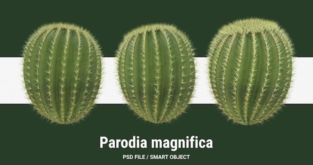 3d-рендеринг изолированного кактуса